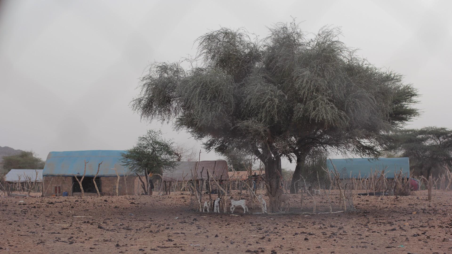 acacia mauritania pablocaminante - Mauritania 4/5, Nouakchott a Gogui