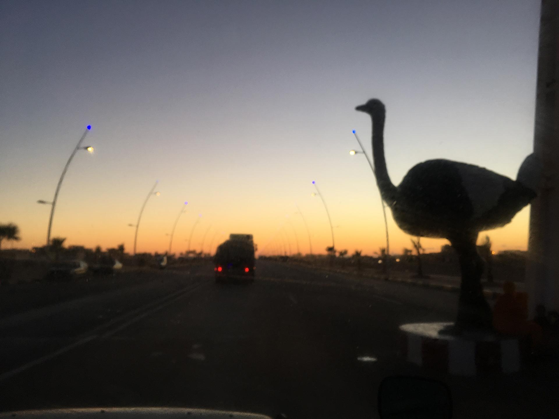 avestruz marruecos pablocaminante 1 - Marruecos 2/3, Sáhara Occidental