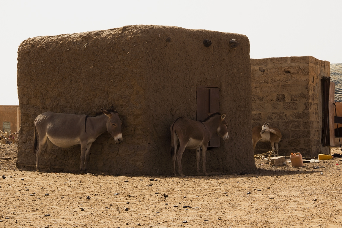 burros sombra mauritania pablocaminante - Mauritania 5/5, Gogui