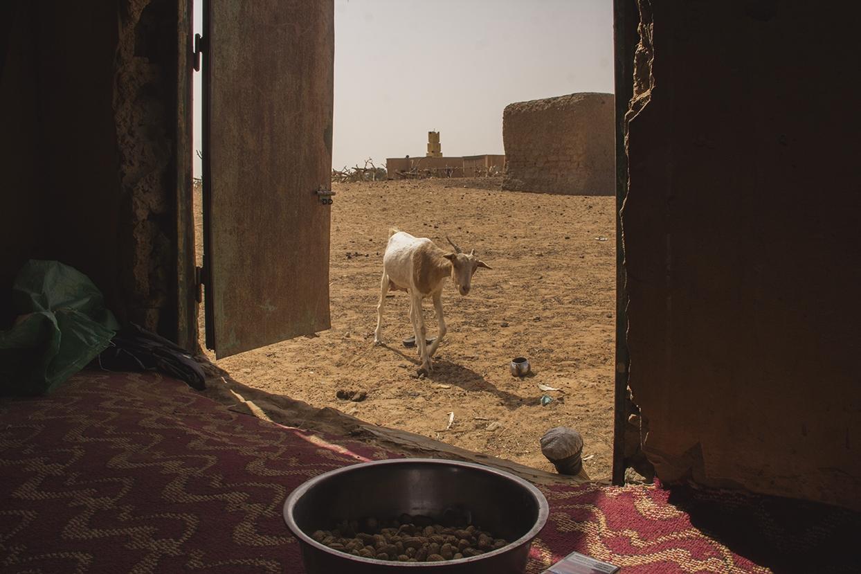 cabra comida mauritania pablocaminante - Mauritania 5/5, Gogui