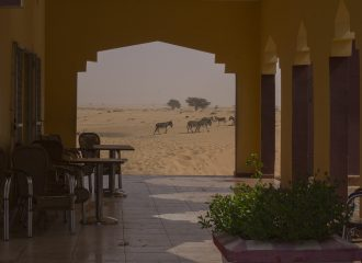 Burros en desierto de Mauritania pablocaminante