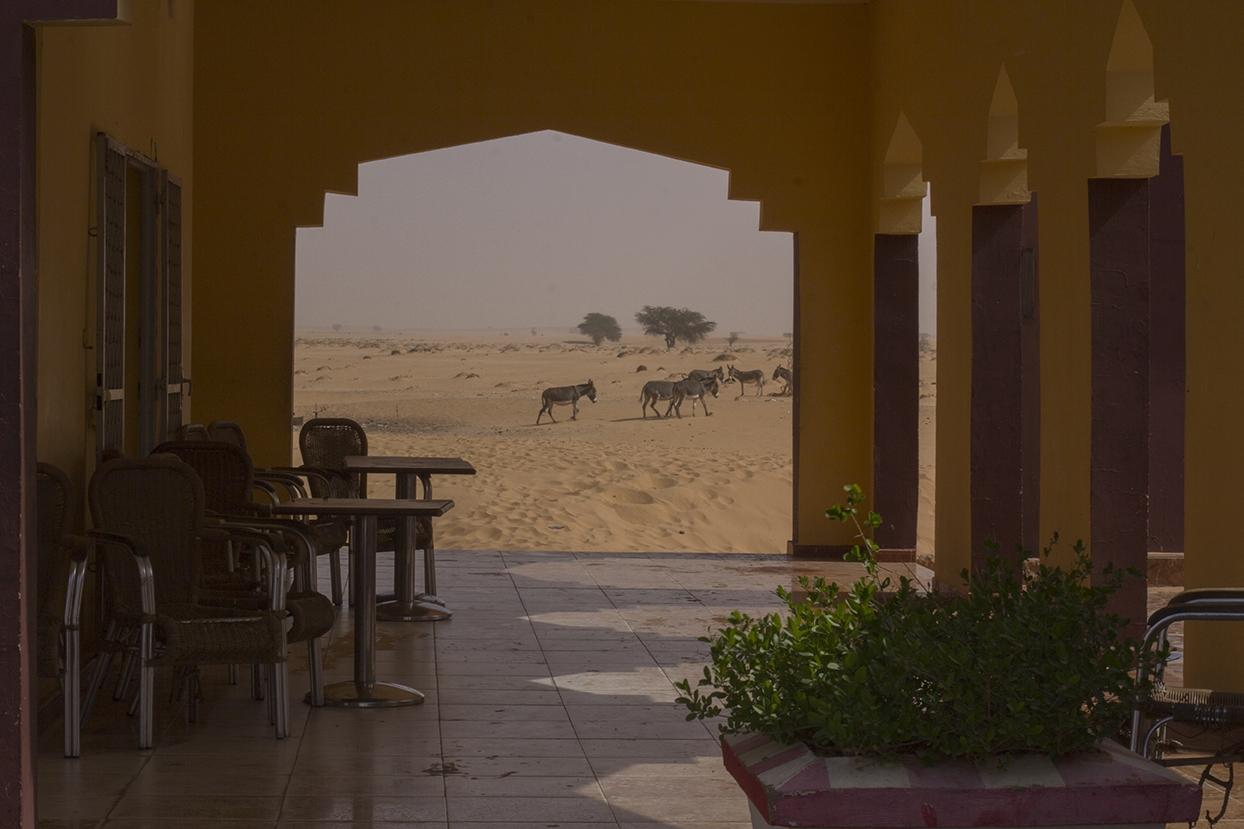 cabras desierto mauritania pablocaminante - Mauritania 2/5, de Nouadhibou a Nouakchott