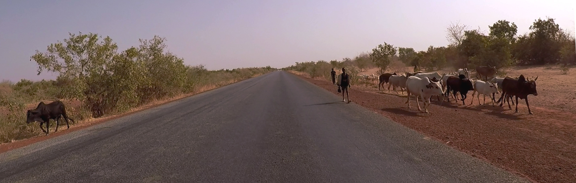 ninos arreando bueyes mali - Mali 2, de Nioro a Ségou