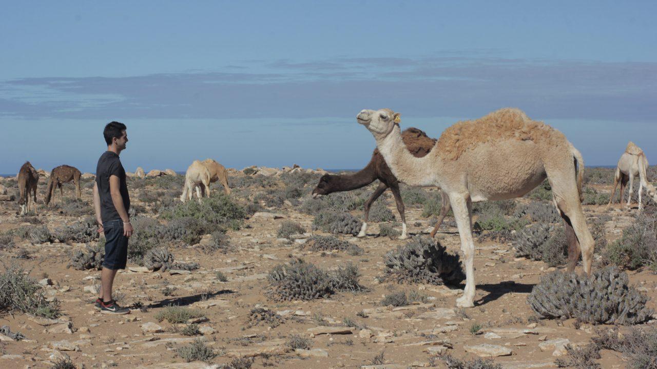 pablocaminante camellos 1280x720 - Marruecos 2/3, Sáhara Occidental