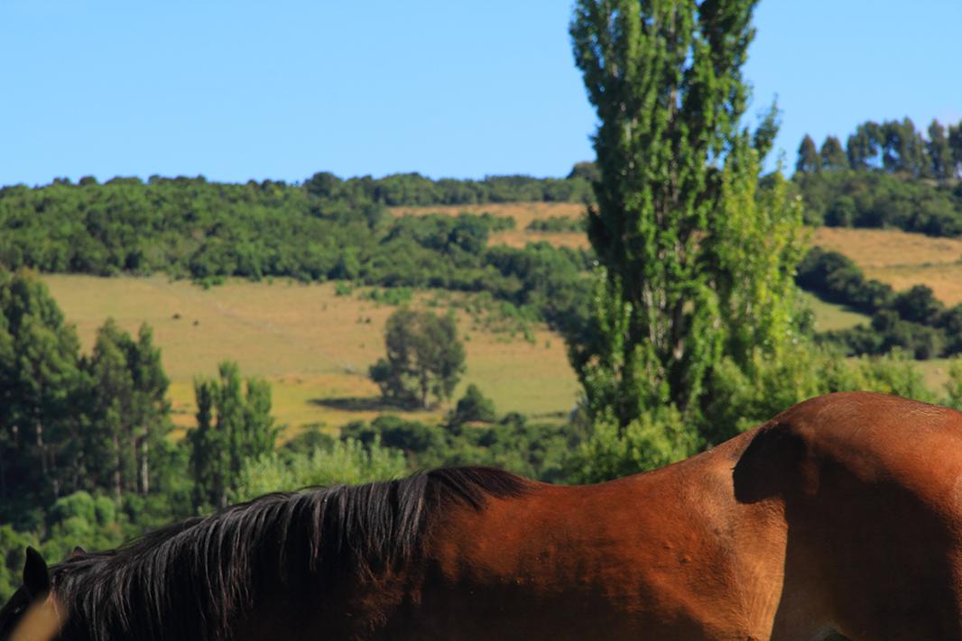 lomo caballo chiloe pablocaminante - Chiloé, Chile