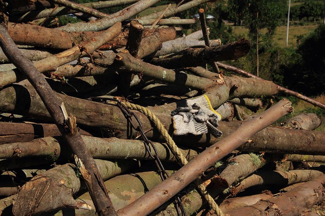 madera lin lin pablocaminante - Chiloé, Chile