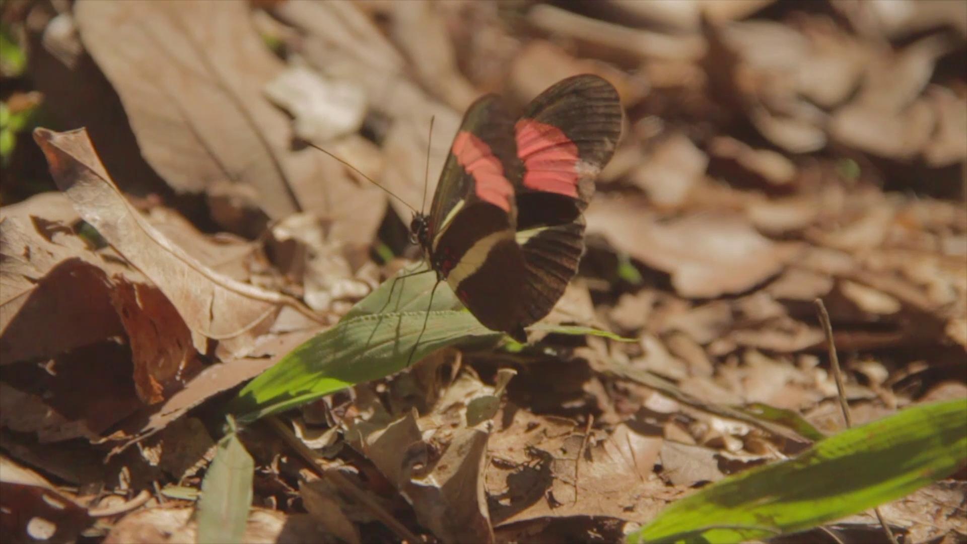 mito iguazu mariposa pablocaminante - Audiovisual
