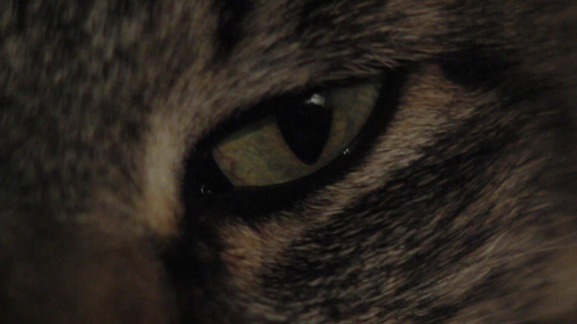 quimica pablocaminante ojo gato - Audiovisual