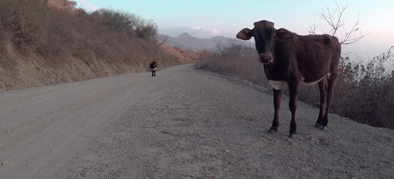 vaca higuera bolivia pablocaminante - Ruta del Che 2/2, La Higuera