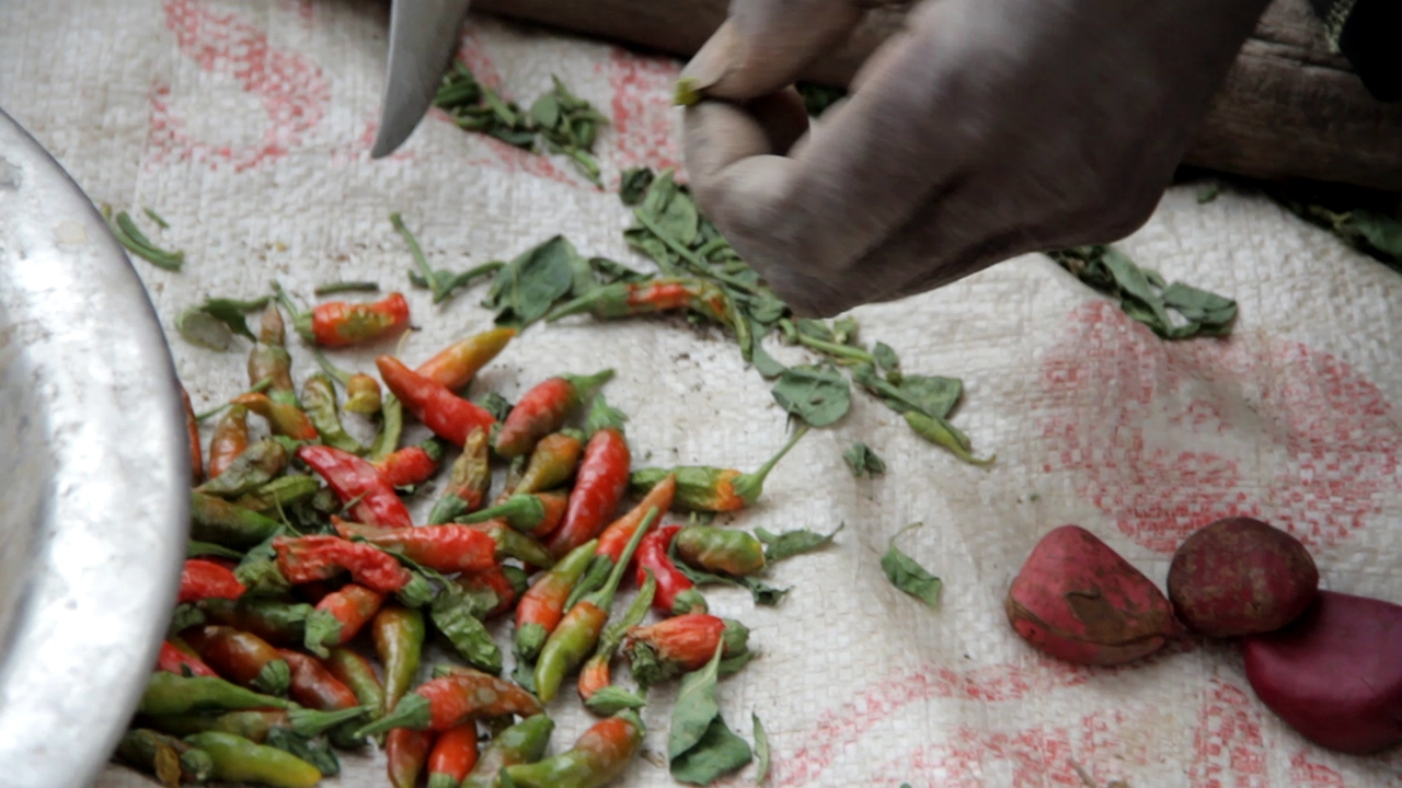 cosecha pimientos dogon pablocaminante - Malí 4, País Dogon I: Ogossogou