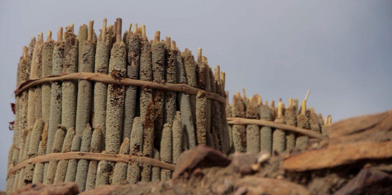 mijo cosechado djiguibombo pablocaminante 1280x638 - Malí 5, País Dogon II: Djiguibombó
