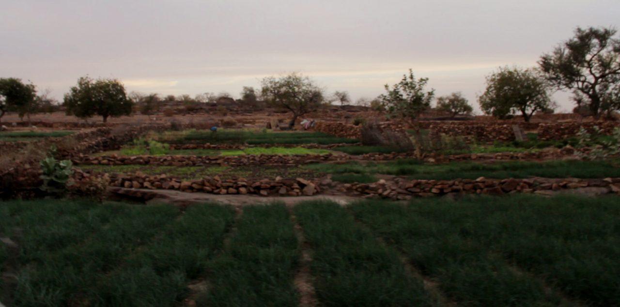plantacion cebolla dogon pablocaminante bandido cine 1280x634 - Malí 4, País Dogon I: Ogossogou