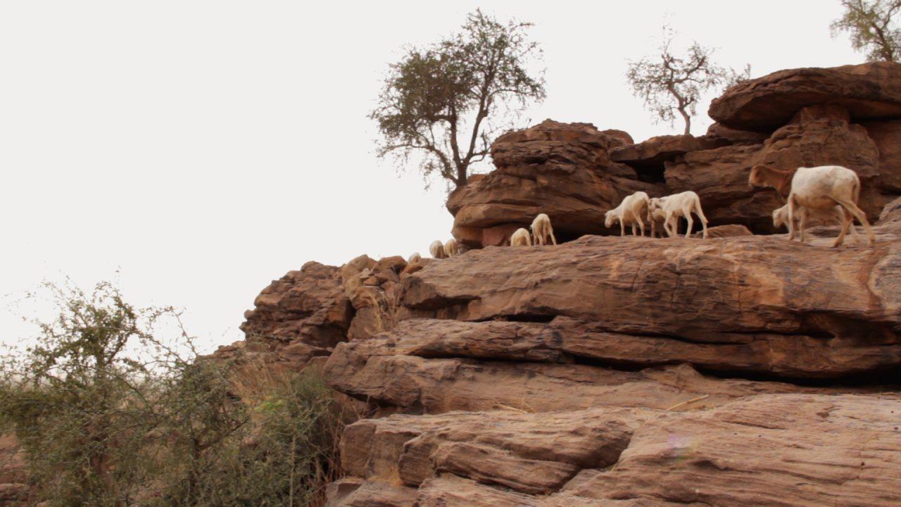cabras acantilado banidagara pablocaminante 1280x720 - Malí 6, País Dogon III: Falla de Bandiagara
